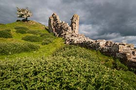 image of Harbottle Castle with a Hawthorn Tree in blossom on a late stormy afternoon